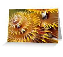 Christmas fireworks Greeting Card