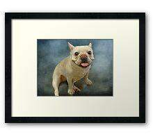Bull Dog Baby Framed Print