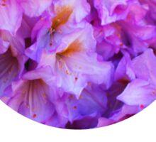 Rhododendron Sticker