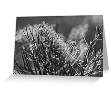 Grevilleas in black and white  Greeting Card