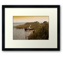 Driftwood On A Reedy Shore. Framed Print
