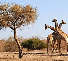 African Giraffe tri- neck-ta by Sharon Bishop