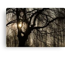 Intricate Lacy Curtains - Sunrise Glow Through the Willows  Canvas Print