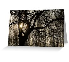 Intricate Lacy Curtains - Sunrise Glow Through the Willows  Greeting Card