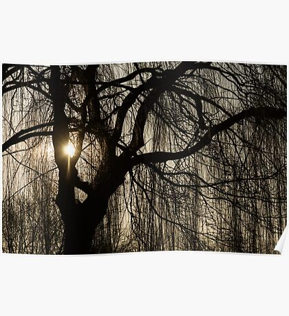 Intricate Lacy Curtains - Sunrise Glow Through the Willows  Poster
