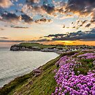 Freshwater Bay Sea Thrift Sunset by manateevoyager