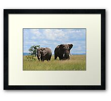 Elephants In The Wild Framed Print