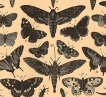 Insect Diagrams - Brockhaus and Efron Sticker