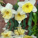 Daffodil Reflections by Elaine Teague