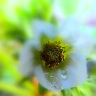 Tears of a flower. by Livvy Young