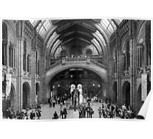 Natural History Museum Poster