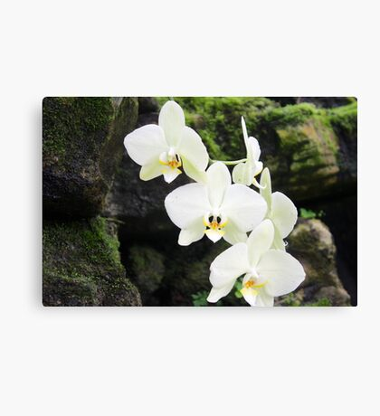 Trail of Flowers Canvas Print