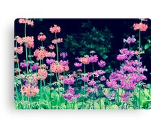 Field of Colour Canvas Print