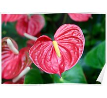 Bright Red Plant Poster