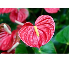Bright Red Plant Photographic Print