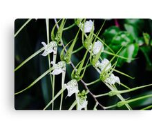 Trail of White Flowers Canvas Print