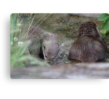Otters in a River Canvas Print