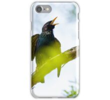 Common Starling on a tree branch iPhone Case/Skin