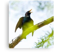 Common Starling on a tree branch Canvas Print