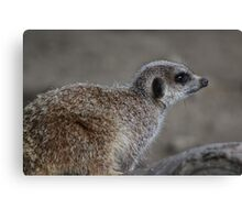 Meercat on Guard Canvas Print