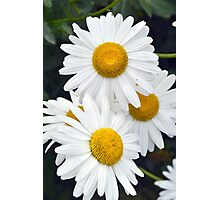 daisies abstract Photographic Print