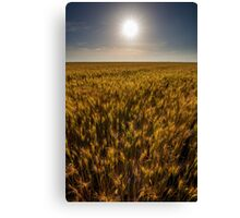Wheat field at sunset, sun in the frame Canvas Print
