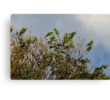 flock of green parrots Canvas Print
