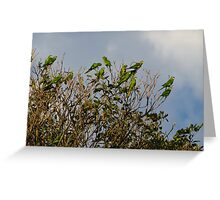 flock of green parrots Greeting Card