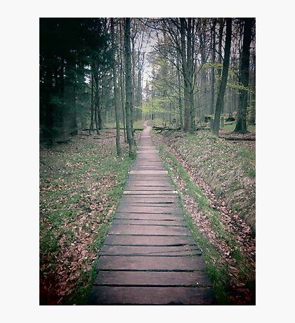 The Path Leads To.... Photographic Print
