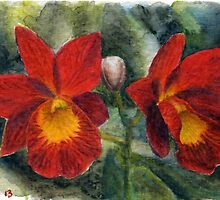 Cattleya Orchid watercolor pencils ACEO by IrVia