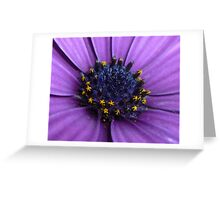 Dark Purple Daisy Greeting Card