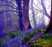 Bluebells in the Forest Rain by Charmiene Maxwell-batten