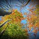 Autumn Variations  by Redrose10