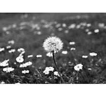 Monochrome Dandelion Photographic Print