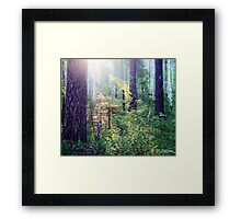 Sunny morning in the forest Framed Print