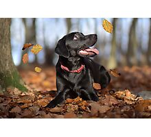 Just loving Autumn Photographic Print