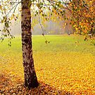 The end of the golden autumn by Redrose10