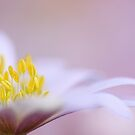 Softly pink by Lyn Evans