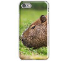 Grazing Capybara II iPhone Case/Skin