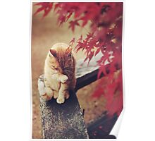 Cat in Nature Poster