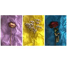 Triptych: Crumpled Flowers Photographic Print