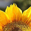 Sunflower   by Declan Carr