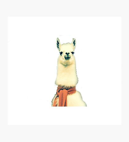Creepy Alpaca  Photographic Print