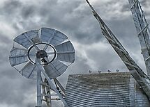 Gulls on the mill by Sue Purveur