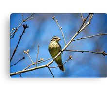 Female Rose-Breasted Grosbeak Canvas Print