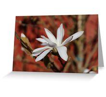 Flower on an Apple Tree Greeting Card