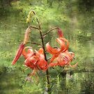 Turk's Cap Lily by Vickie Emms