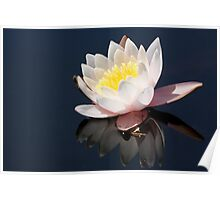 Water Lilly 6025 Poster
