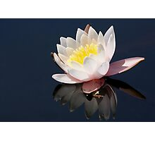Water Lilly 6025 Photographic Print