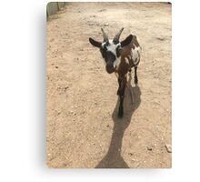 The Little Goat Canvas Print